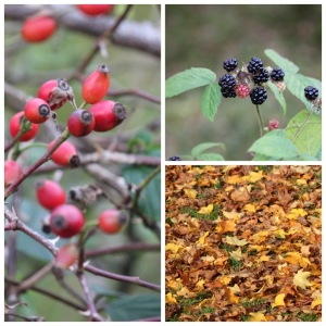 Autumnal fruits
